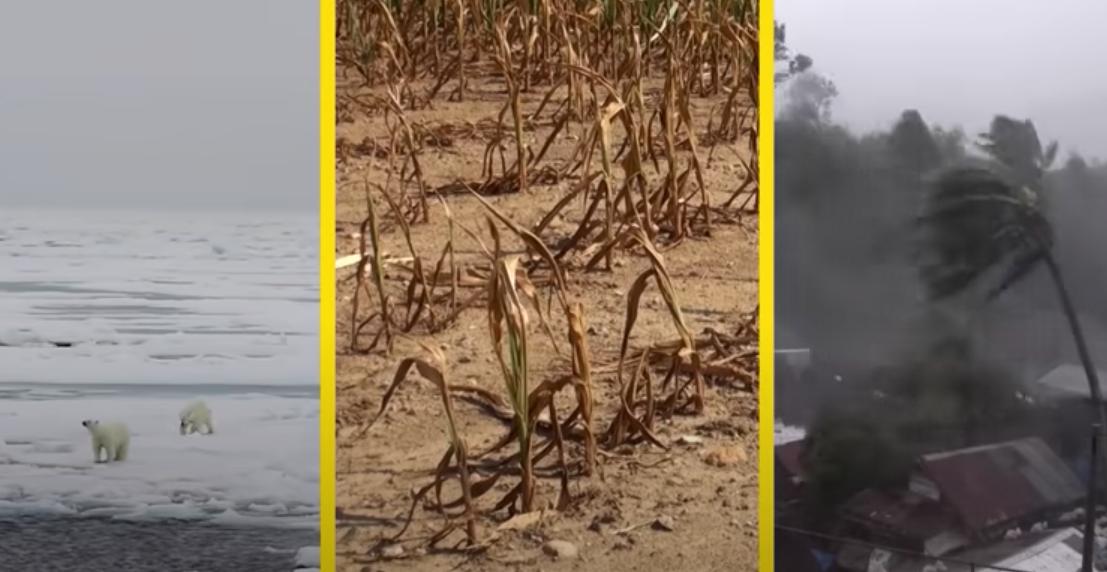 Cause ed effetti del cambiamento climatico